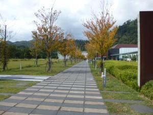 博物館へと向かう並木道